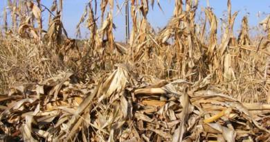 Pomoc klęskowa dla rolników. Trwa nabór wniosków