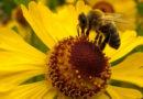 Bezpieczeństwo pszczół jest bardzo ważne!