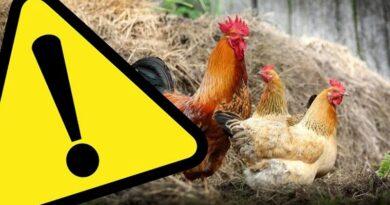Komunikat dot. ptasiej grypy